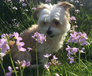 flowers, dog, and puppy image