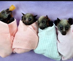 baby bats and bats image