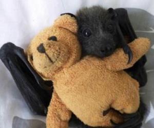 baby bats and bat image