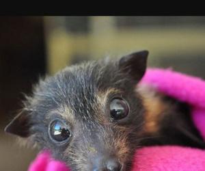baby bats, bat, and cute image