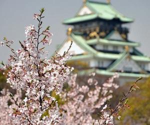 japan, sakura, and Temple image