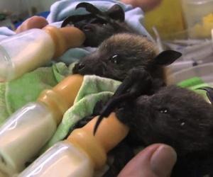 baby bats, cute, and bats image