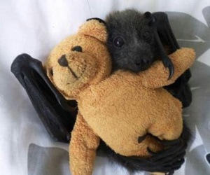 bat, teddy, and animal image