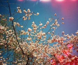 35mm, analog, and blossom image