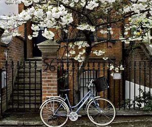flowers, bike, and house image