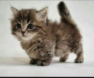 baby, kitten, and animels image