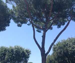nature, rome, and sky image