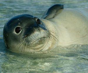 adorable, animal, and nature image