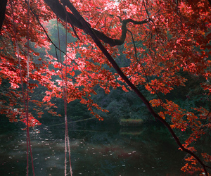 nature, autumn, and leaves image