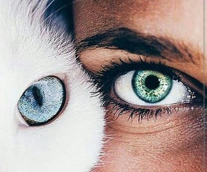 blue eyes, green eyes, and eyes image