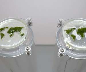 algae, moss, and science image