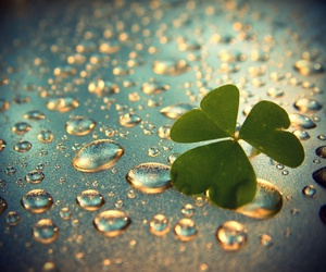 clover and rain image