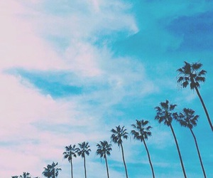 palm trees, place, and sky image