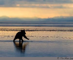 sunset, baby animals, and bear cub image
