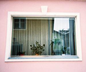 pink, plants, and window image