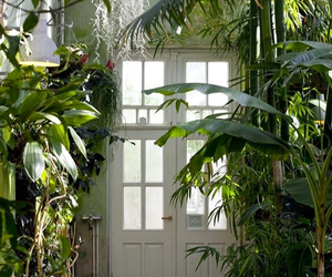 green, house, and plants image