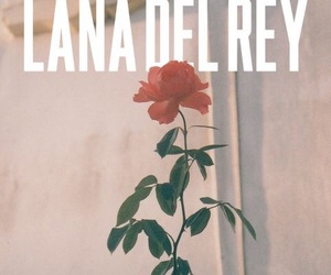 lana del rey, rose, and vintage image