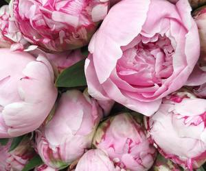 bouquet, peony, and chic image