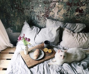 breakfast, cat, and flowers image