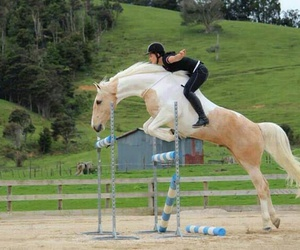 horse and jumping image