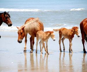 animal, horse, and sea image