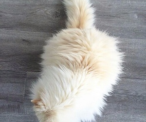 cat, animal, and fluffy image