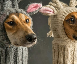 chiens, photo, and photographie image