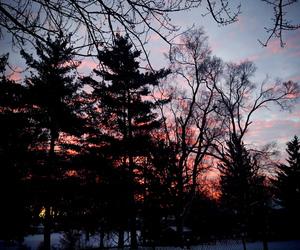 tree, sky, and sunset image