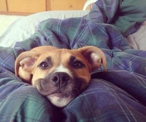 dog, animal, and smile image