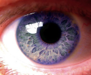 eye, violet, and violeta image
