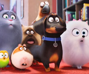 watch online and the secret life of pets image