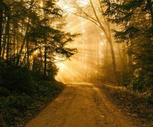 nature beautiful sun image