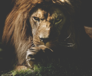 cute and animal. lion image