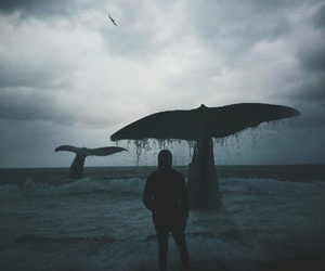 whale and sea image
