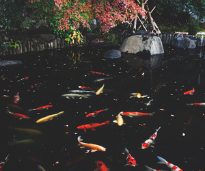amazing, fish, and japan image