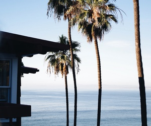 ocean, palm trees, and summer image