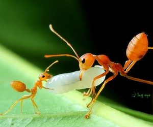 ant, close up, and photography image