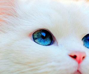 blue, eye, and cat image