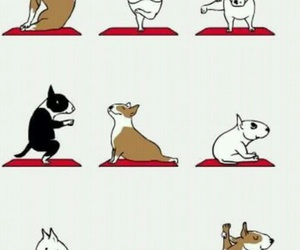 bullterrier, dogs, and yoga image