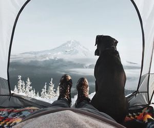 adventure, camping, and dog image