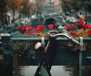 flowers, bicycle, and city image