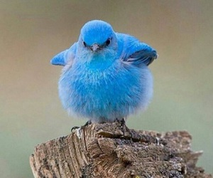 animals, birdie, and blue image