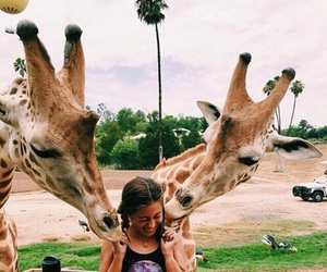 animal, girl, and giraffe image