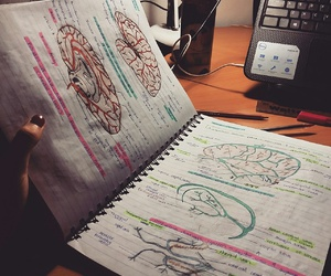 art, neuroanatomy, and drawing image