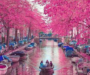 amsterdam, beautiful, and pink image