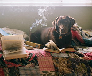 dog, book, and bed image