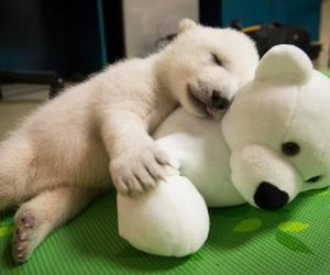 Polar Bear and cute image