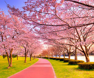 pink, pink trees, and w3sley image