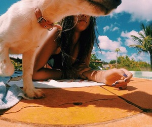 tropical, dog, and beach image
