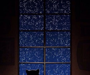 cat, stars, and night image